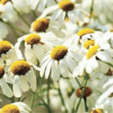 Plante medicinale si terapii naturiste cu plante - fitoterapie